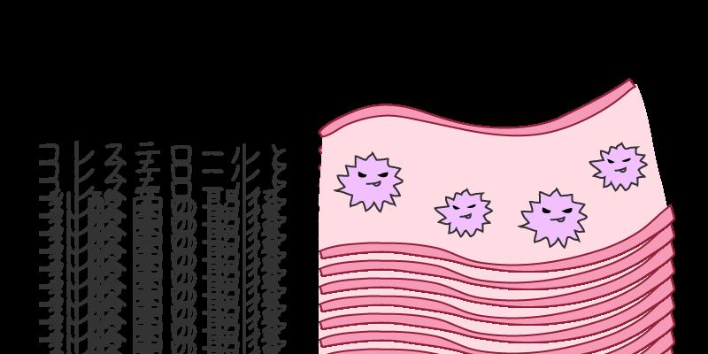 コレステロール