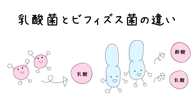 乳酸菌とビフィズス菌