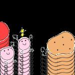 腸内の善玉菌、悪玉菌と乳酸菌の関係