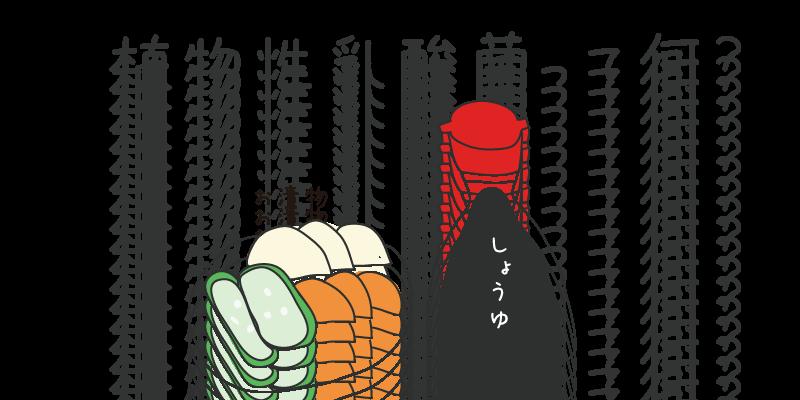 植物性乳酸菌2